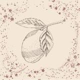 Retro- Art Übergeben Sie gezogene Skizze mit Zitrone auf Sepiaweinlesehintergrund lizenzfreie abbildung
