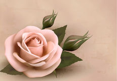 Retro background with beautiful pink rose. With buds. Vector illustration Stock Photo