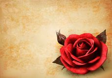 Retro background with beautiful red rose with buds Royalty Free Stock Images