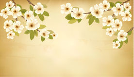 Retro background with blossoming tree brunch and w Stock Images