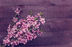 Retro background with branches pink flowers stock images