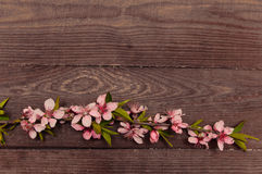 Retro background with branches pink flowers stock photo