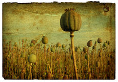 Retro Background - Poppy Field 1 Stock Images