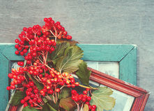 Retro a background with red berries and old photoframework Royalty Free Stock Photos