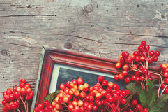 Retro a background with red berries and old photoframework Stock Photos