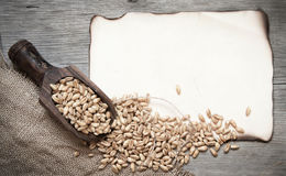Retro background with wheat grains Stock Images