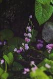 Retro bakgrund av små rosa färgblommor med gräsplansidor och trädfilialen på bakgrund Arkivfoto