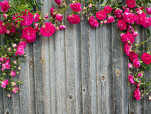 Retro bakgrund för tappning med rosor på ridit ut trä romantiker Arkivfoto
