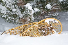 Retro bear paw snowshoes snow pine tree Stock Photos