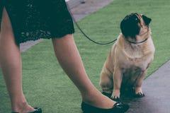 Retro beeld Pug hond die de eigenaar bekijken Stock Afbeeldingen