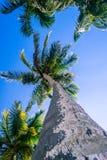 Retro beeld van mening van de Palmen de lage hoek stock afbeeldingen