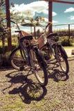 Retro biciclette di stile - giro della serra di viti Immagine Stock
