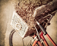 Retro bicycle with flower in a basket Royalty Free Stock Image