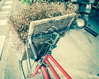 Retro bicycle with flower in the basket Stock Image