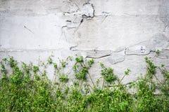 Retro biel ściana Obraz Royalty Free