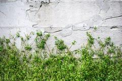 Retro biel ściana Obrazy Royalty Free