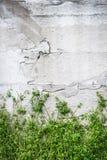 Retro biel ściana Zdjęcia Stock