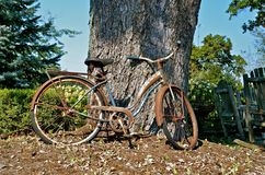 Retro bike leaning against tree. An old retro bike leans again a massive maple tree in a park Royalty Free Stock Photos