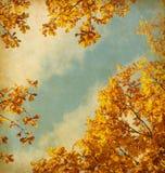 Retro- Bild der Herbstblätter lizenzfreies stockfoto