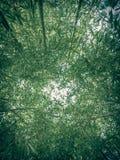 Retro- Blick Bambusanlagen Stockfotografie
