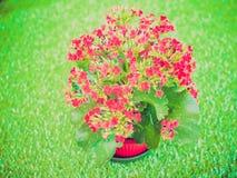 Retro- Blick Kalanchoe-Blume Lizenzfreie Stockfotos