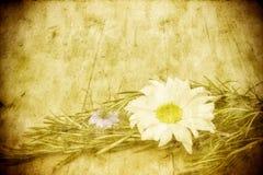 Retro blom- kort Royaltyfri Fotografi