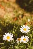 Retro blommaängtappning Arkivbild