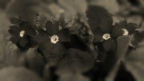 Retro blomma för fotovårträdgård Royaltyfria Bilder
