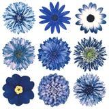Retro blommaval för olik tappning som isoleras på vit Royaltyfri Foto
