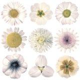 Retro blommaval för olik tappning som isoleras på vit Arkivfoton