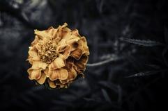Retro blommor, tappning blommar bakgrund royaltyfri foto
