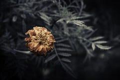 Retro blommor, tappning blommar bakgrund arkivbilder