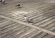 Retro Boardwalk with Seagulls Royalty Free Stock Image