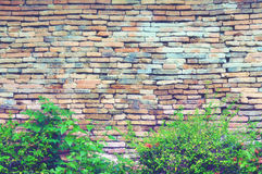 Retro Brick walls and hedges Stock Photos