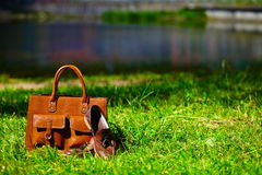 Retro brown shoes and man leather bag in bright colorful summer grass Stock Images