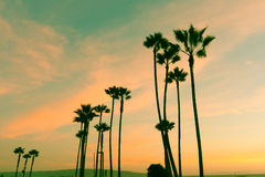 Retro Californian nights colorful sky and silhouette palms at su Stock Images
