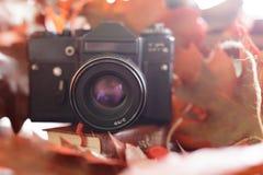 Retro camera in de herfst met heldere rode bladeren op een houten tabl Stock Foto