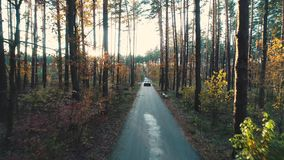 Retro car rides in forest in sunlight stock video