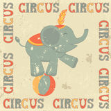 Retro circus poster with elephant Stock Photography
