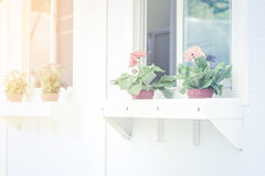 Retro color Flower by the windows Royalty Free Stock Image