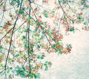 Retro color tone of Flam-boyant flower with light grunge background Royalty Free Stock Images