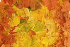 Retro composition from autumn leaves Royalty Free Stock Image