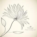 Retro concetto del fondo del fiore Vettore Immagini Stock