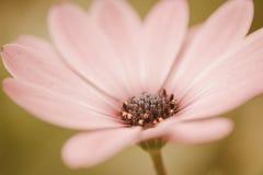 Retro de wijnoogst van de bloemweide Stock Fotografie
