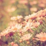 Retro de wijnoogst van de bloemweide Royalty-vrije Stock Fotografie