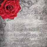 Retro design background with red rose Royalty Free Stock Image