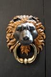 Retro door handle knocker Royalty Free Stock Photo