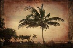 Retro drzewko palmowe Fotografia Stock