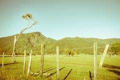 Retro effect New Zealand rual landscape Stock Images