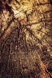 Retro effect op een houten stomp Stock Foto's